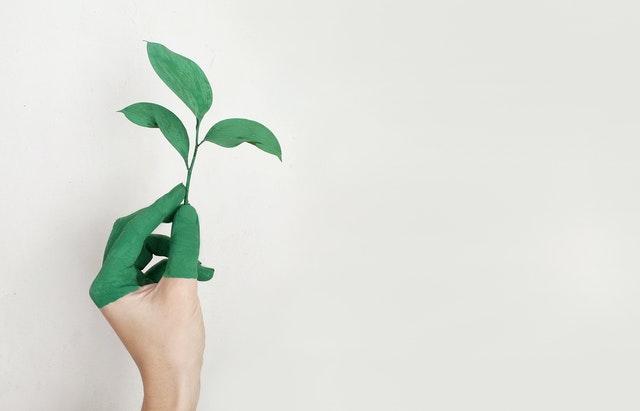 ekologia, jak być eko, jak dbać o środowisko, zasady eko, oszczędność wody, oszczędność prądu, oszczędzanie środowiska,