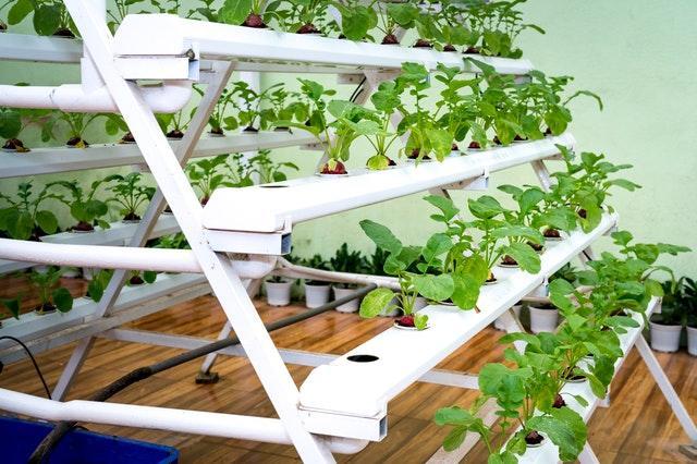 domowy ogródek, domowe zioła, domowy ogród z ziołami, jak stworzyć domowy ogród, jakie zioła można hodować, hodowla ziół,
